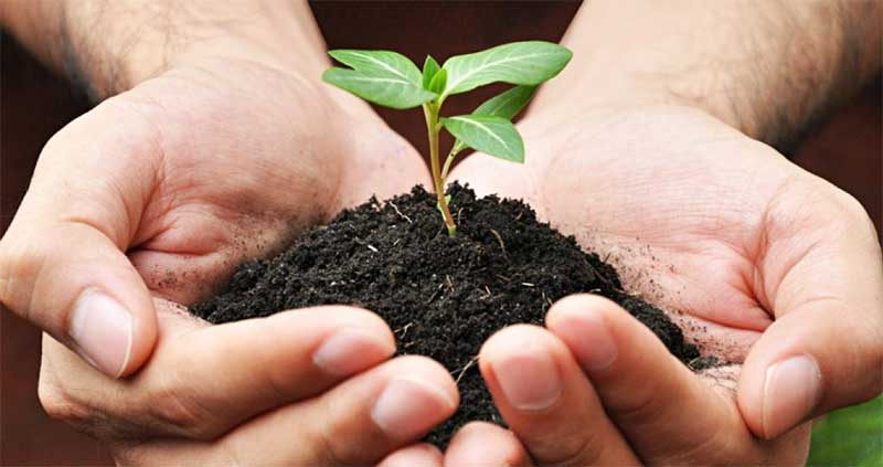 Soil-Hands-1